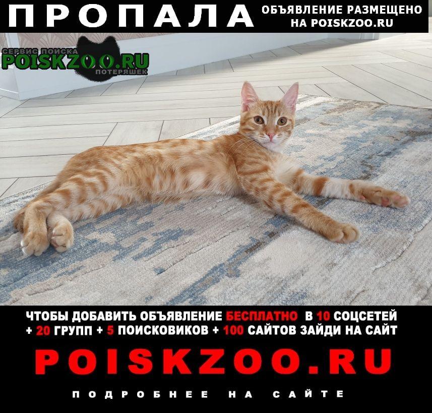 Оренбург Пропал кот