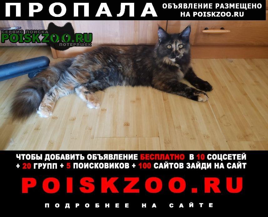 Пропала кошка Азов