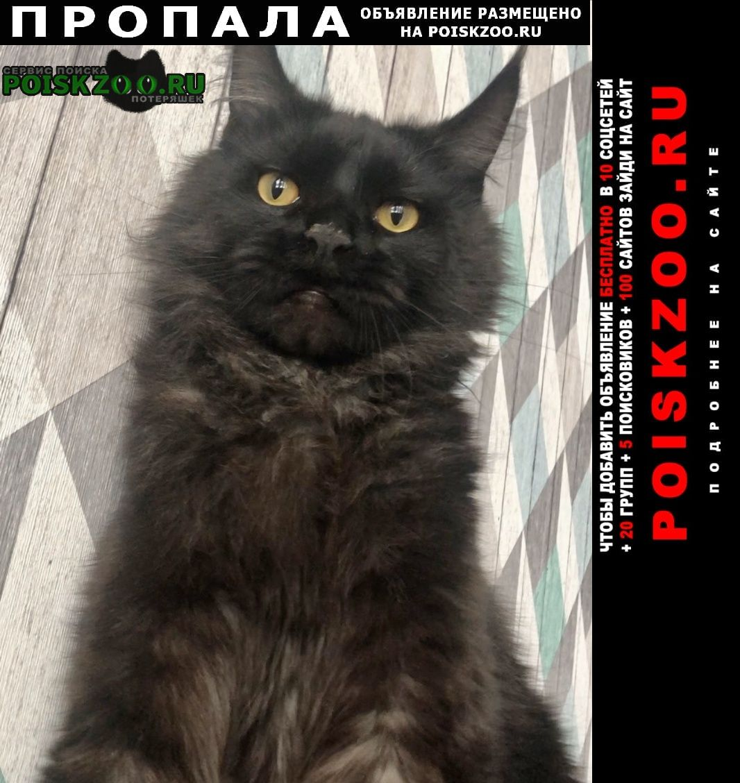 Мытищи Пропал кот мейкун 2 года