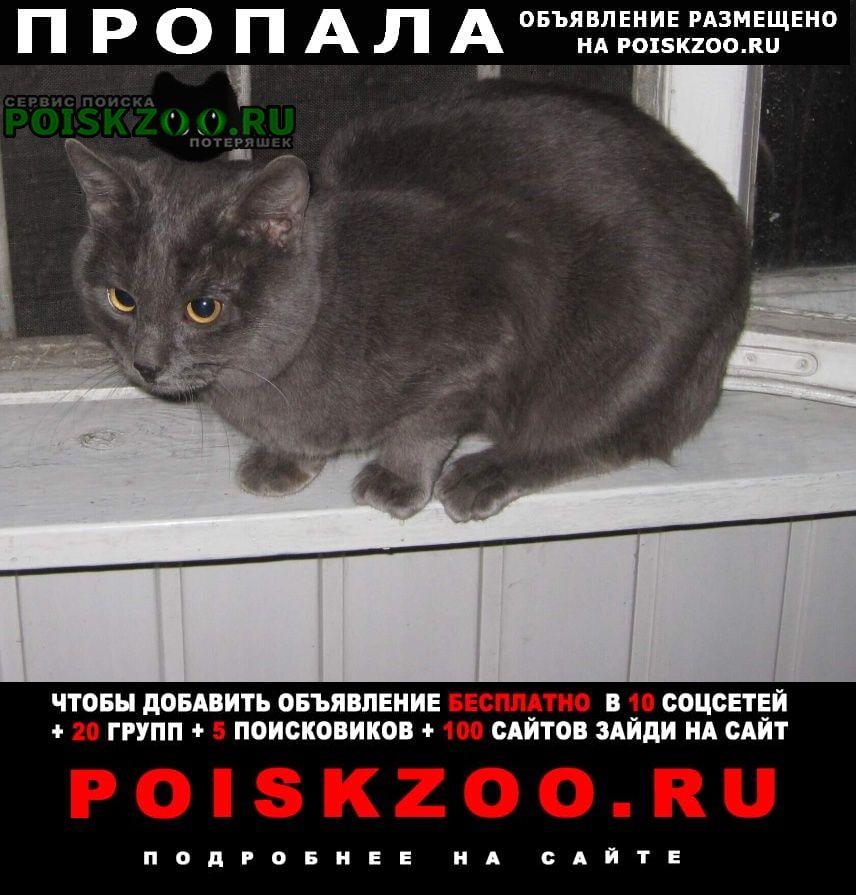 Липецк Пропал кот в районе центрального рынка