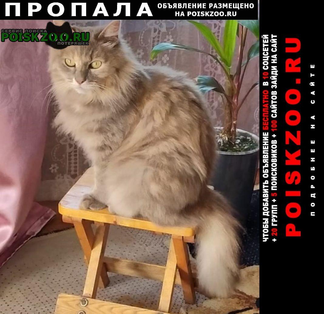 Хабаровск Пропала кошка потерялась