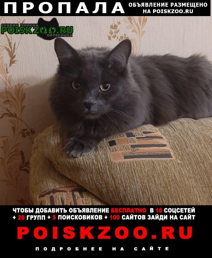 Новокузнецк Пропал кот