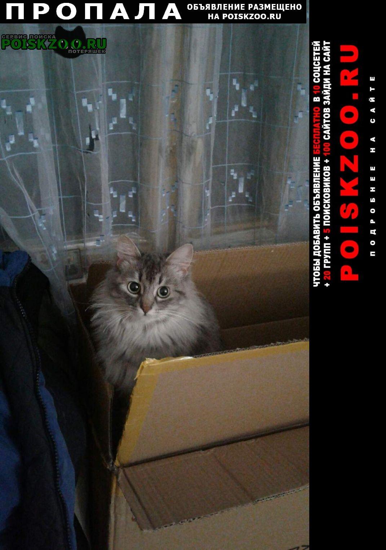 Пропала кошка на 800 лет москвы 11 к 1 Москва