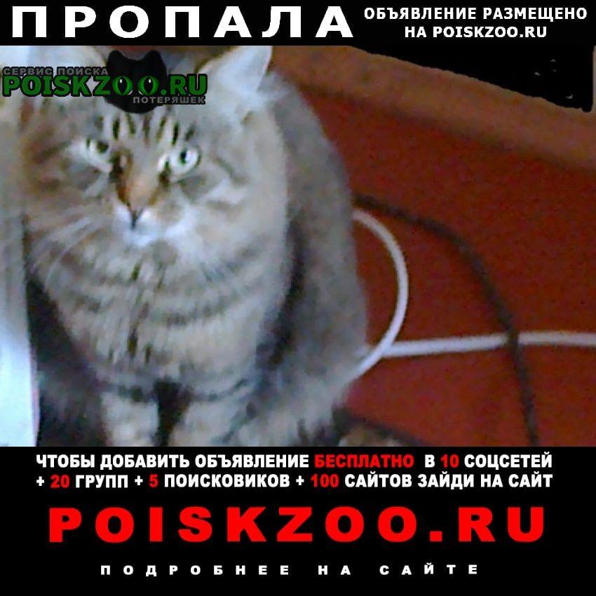 Киев Пропал кот
