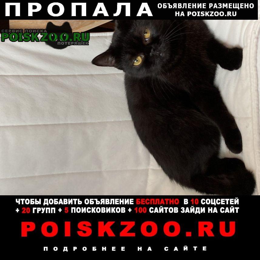 Пропала кошка пожалуйста помогите найти кошку Сочи