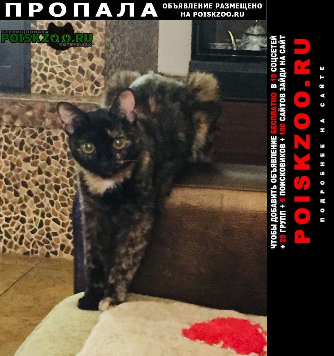 Пропала кошка Сыктывкар