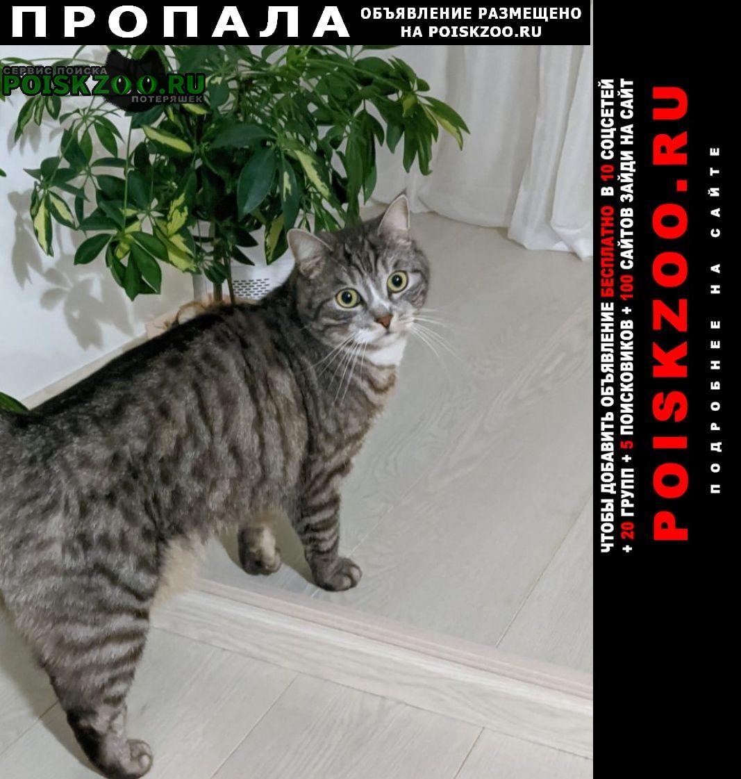 Тула Пропал кот