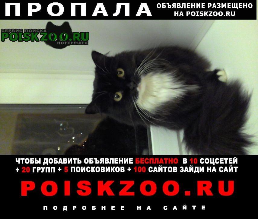 Пермь Пропала кошка