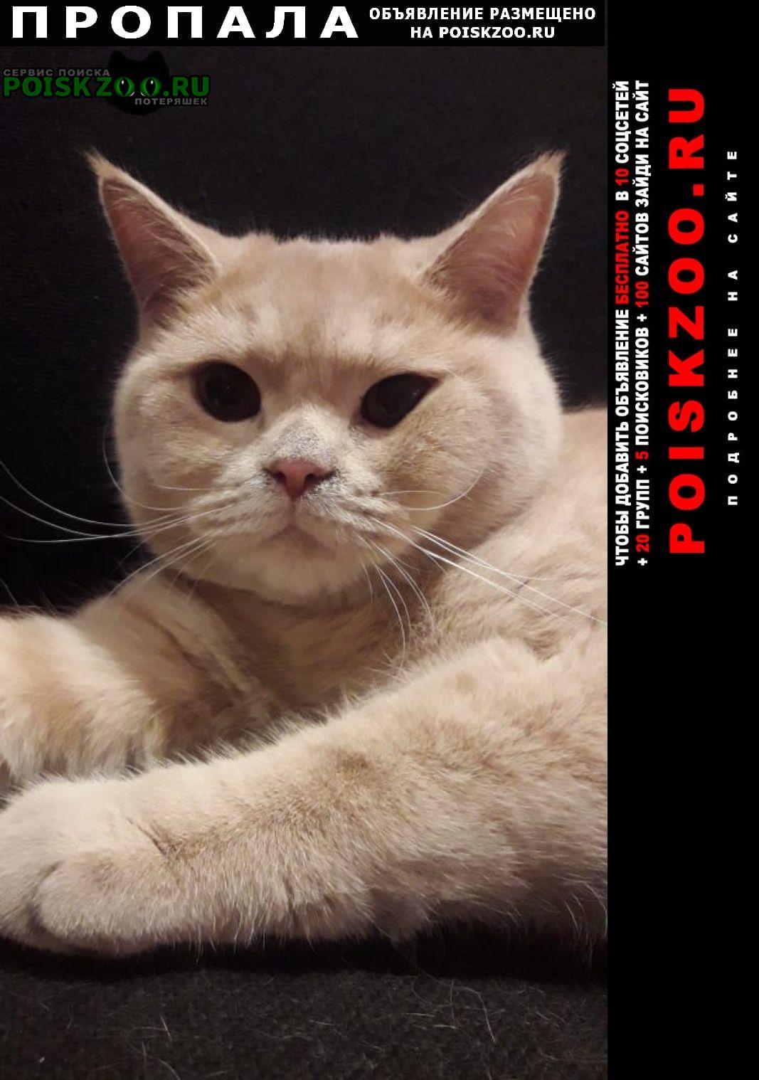 Пропал кот британец Чита