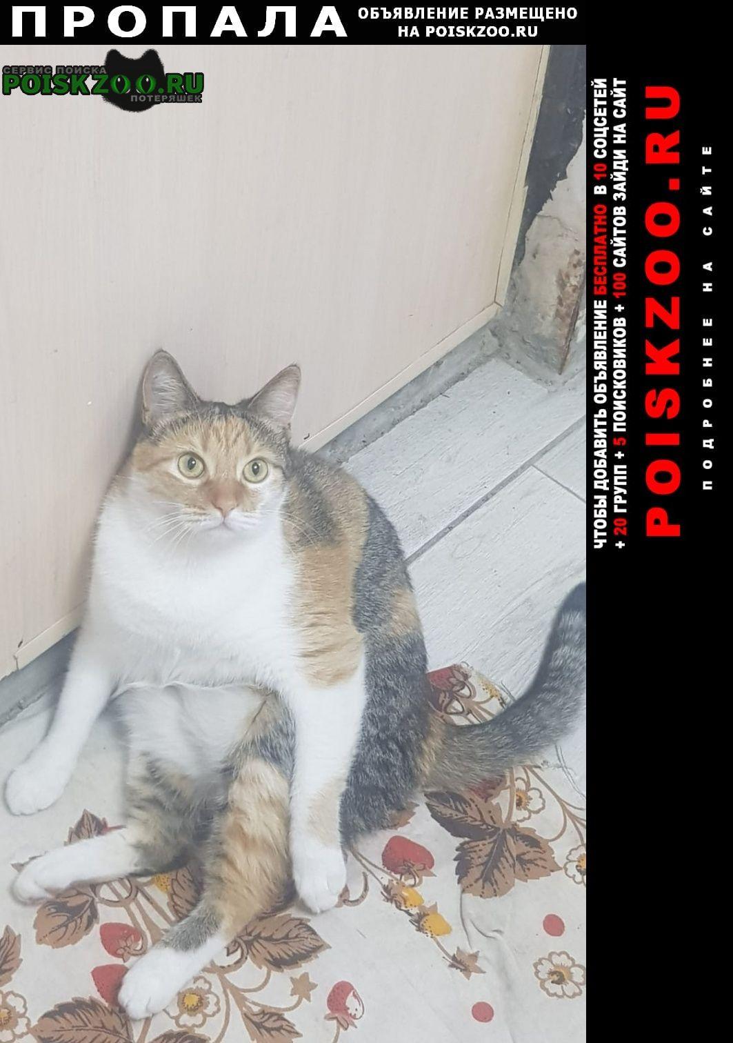 Ростов-на-Дону Пропала кошка. районе 43 линии