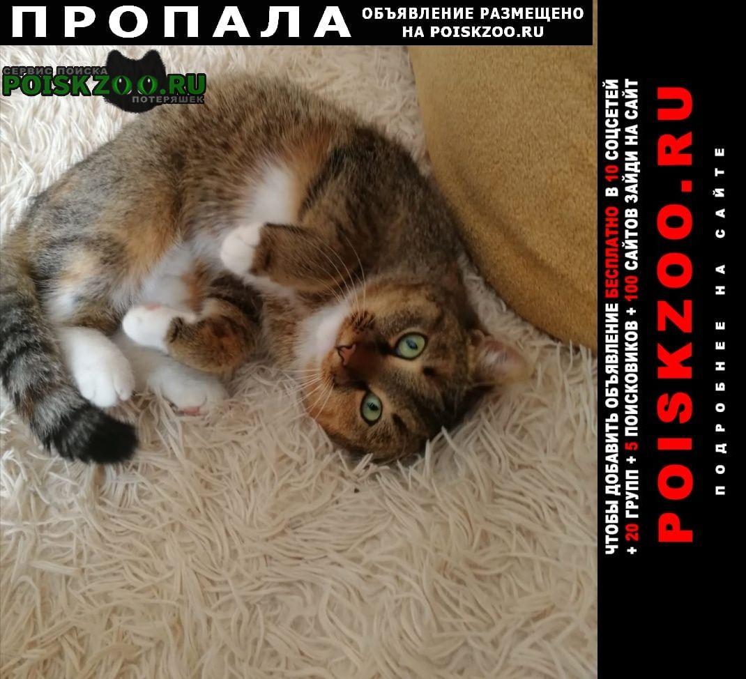 Липецк Пропала кошка в районе 12 школы