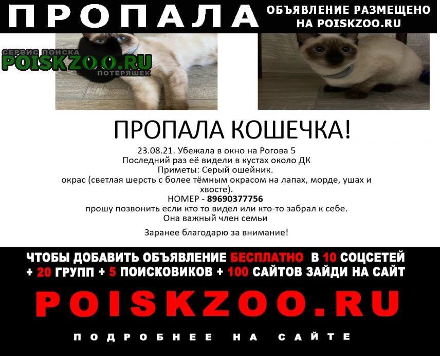 Пропала кошка пожалуйста помогите найти потеряшку Москва
