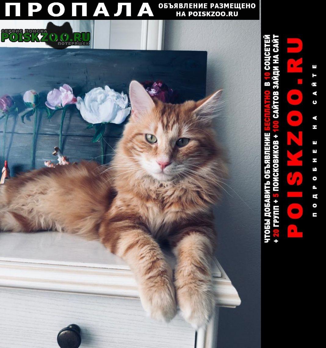Кинешма Пропал кот