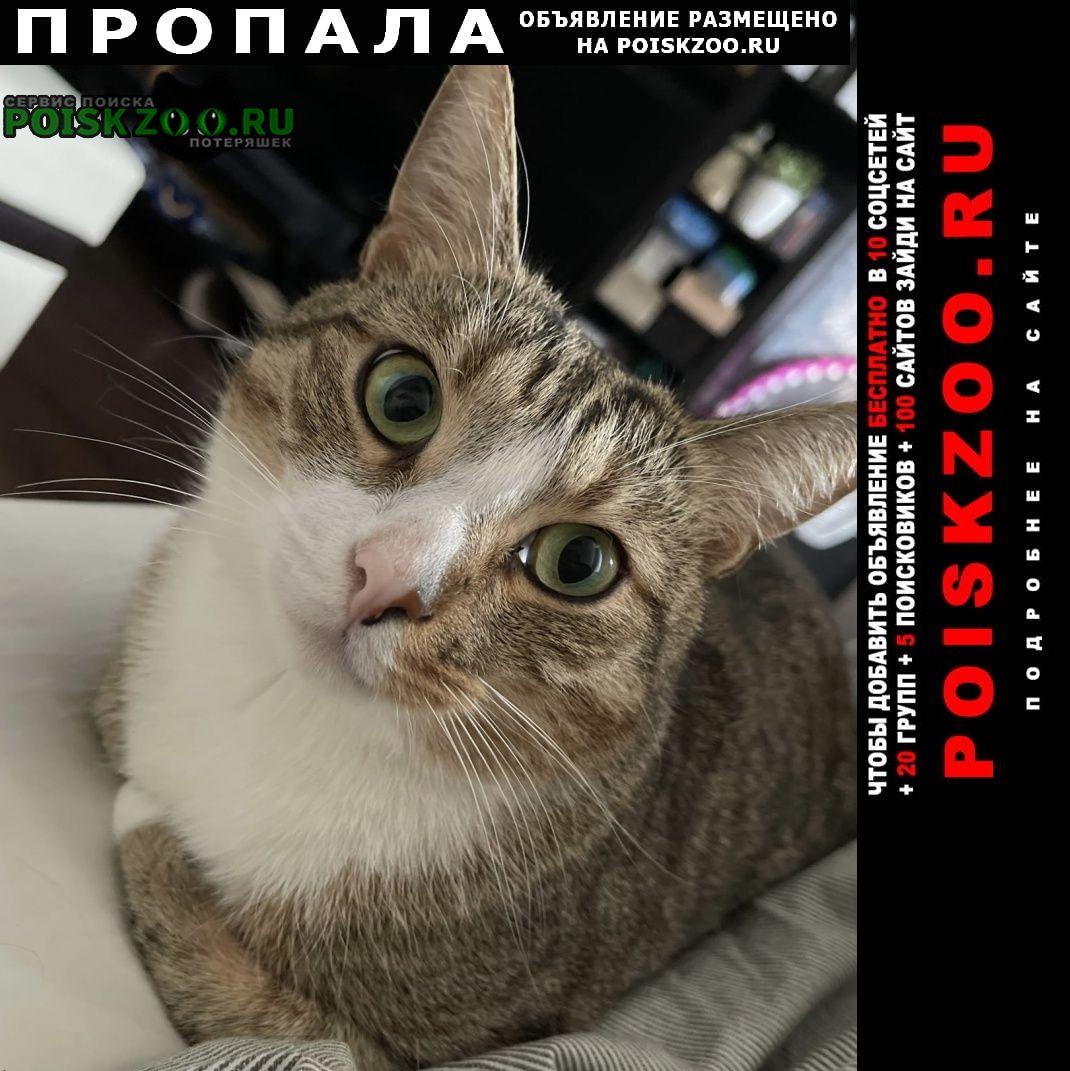 Севастополь Пропал кот