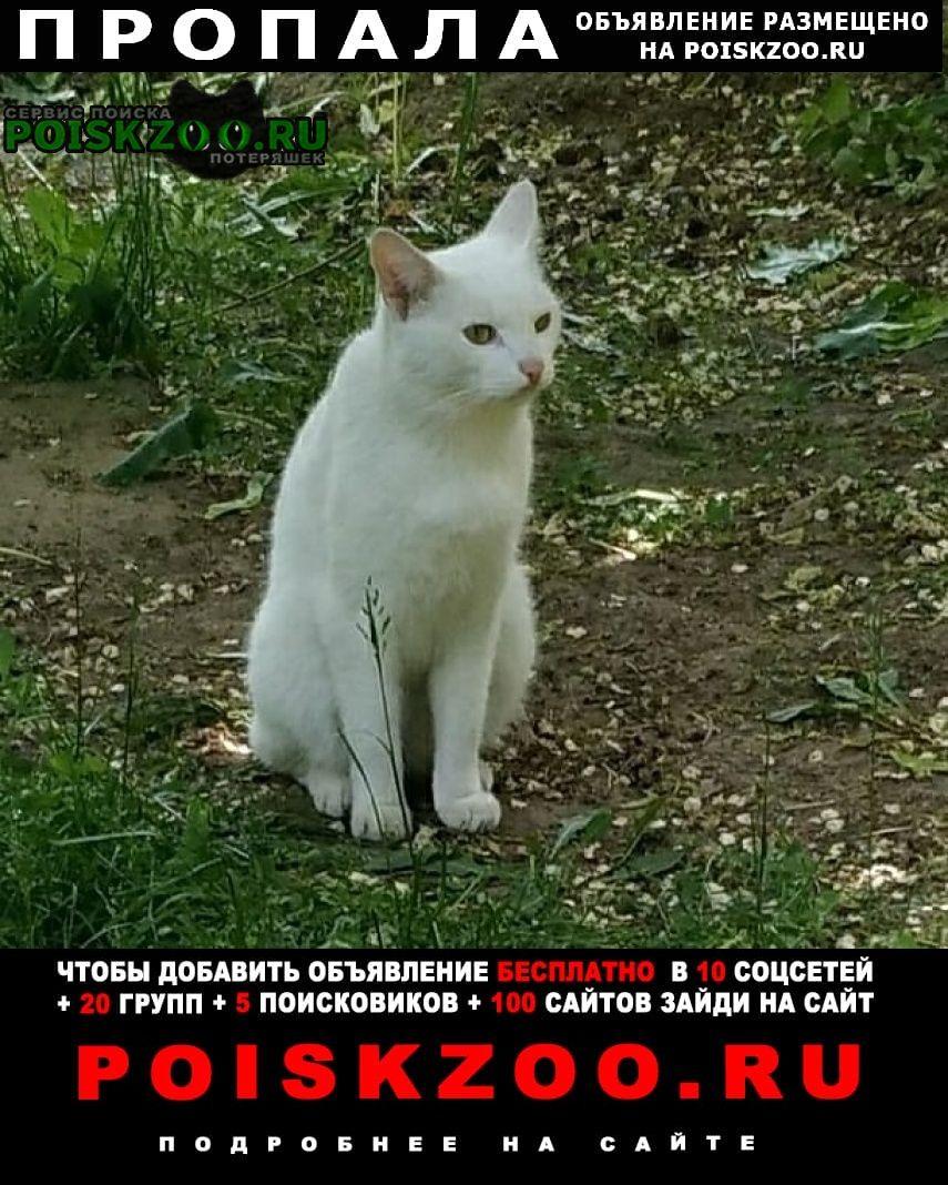 Новомосковск Пропал кот 9 июля