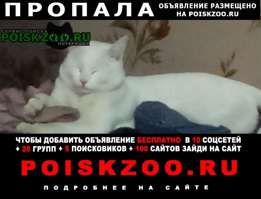 Красноярск Пропал кот