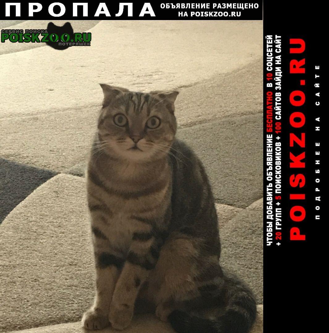 Самара Пропал кот тимоша, ушёл гулять 23.09 не вернулся