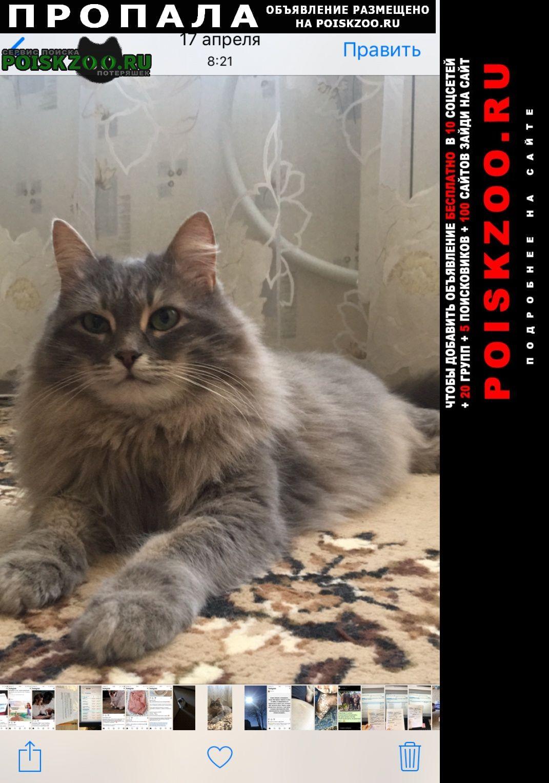 Пропала кошка Набережные Челны