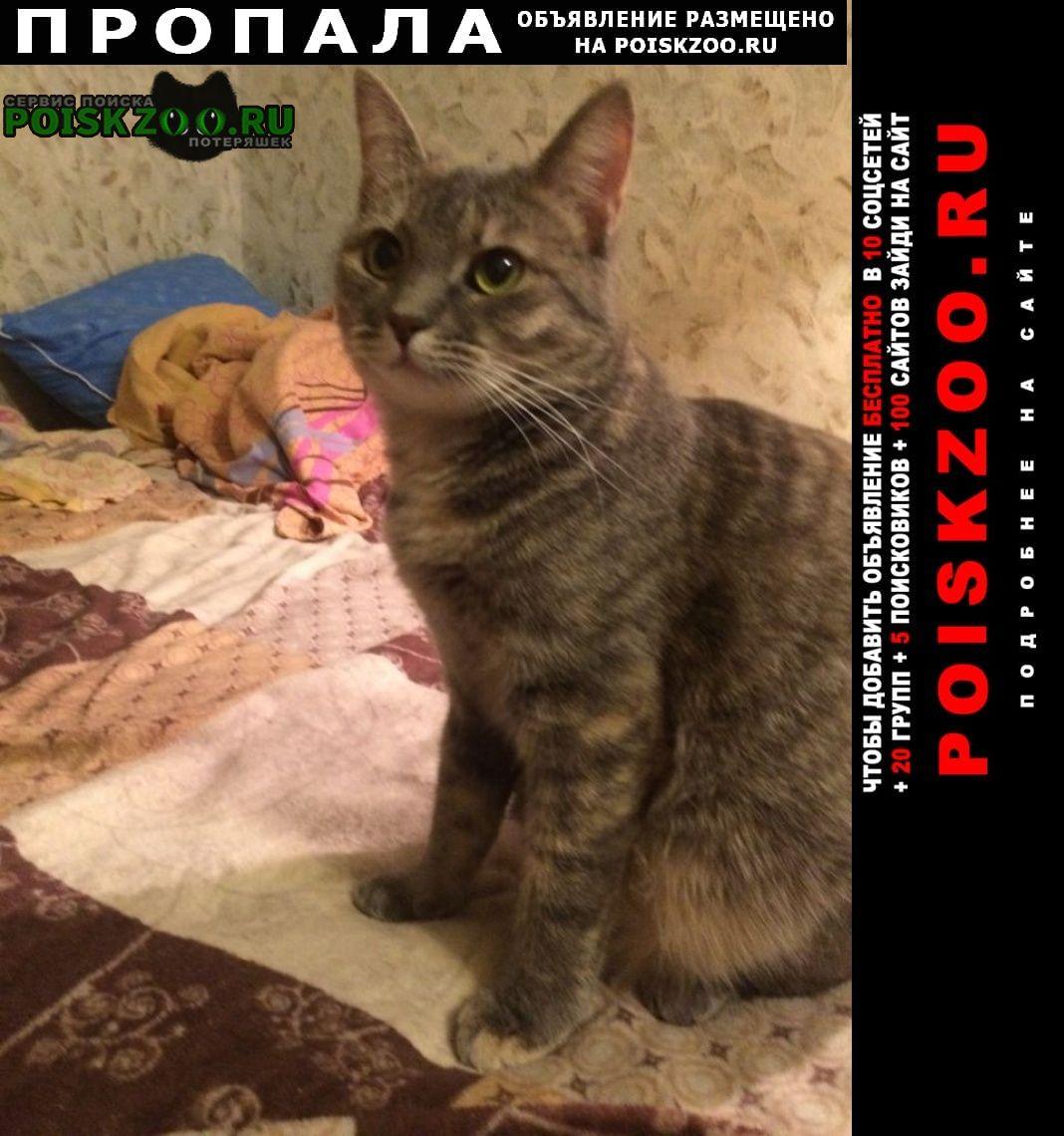 Тверь Пропала кошка помогите найти кошку мурку