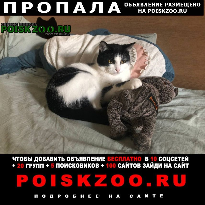 Пропал кот черно-белый. олеко дундича Москва