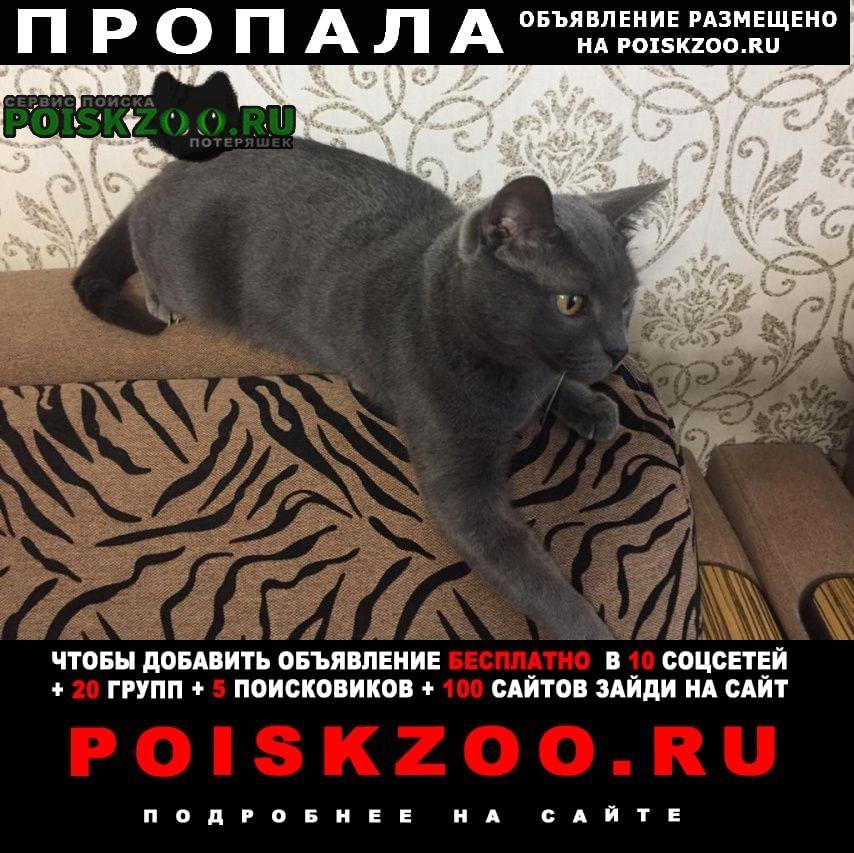 Новокуйбышевск Пропала кошка порода русская голубая