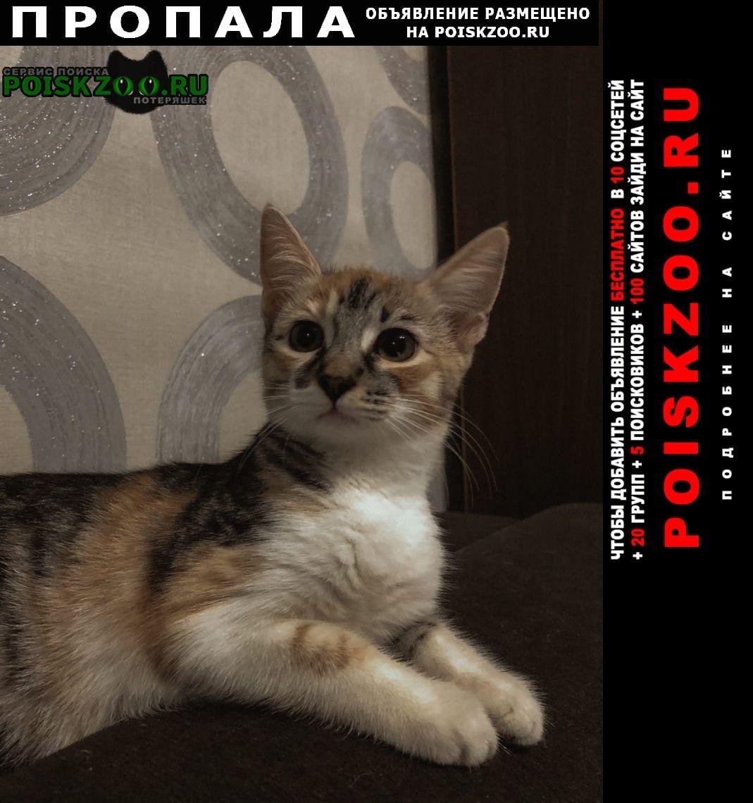 Пропала кошка по кличке боня. Москва
