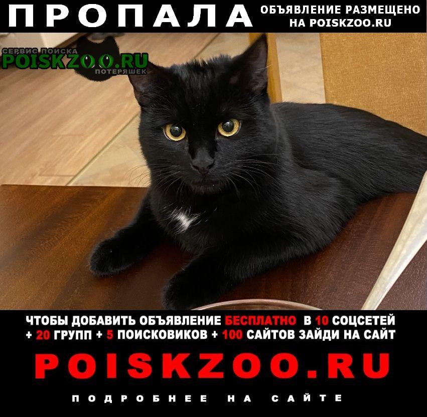 Одинцово Пропала кошка чёрная с белой грудкой