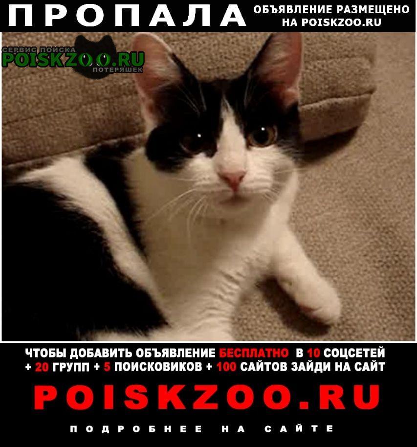 Пропала кошка Тольятти