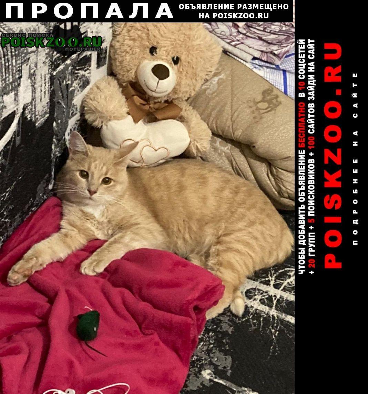 Пропал кот персикового цвета. вознаграждение Нижний Новгород