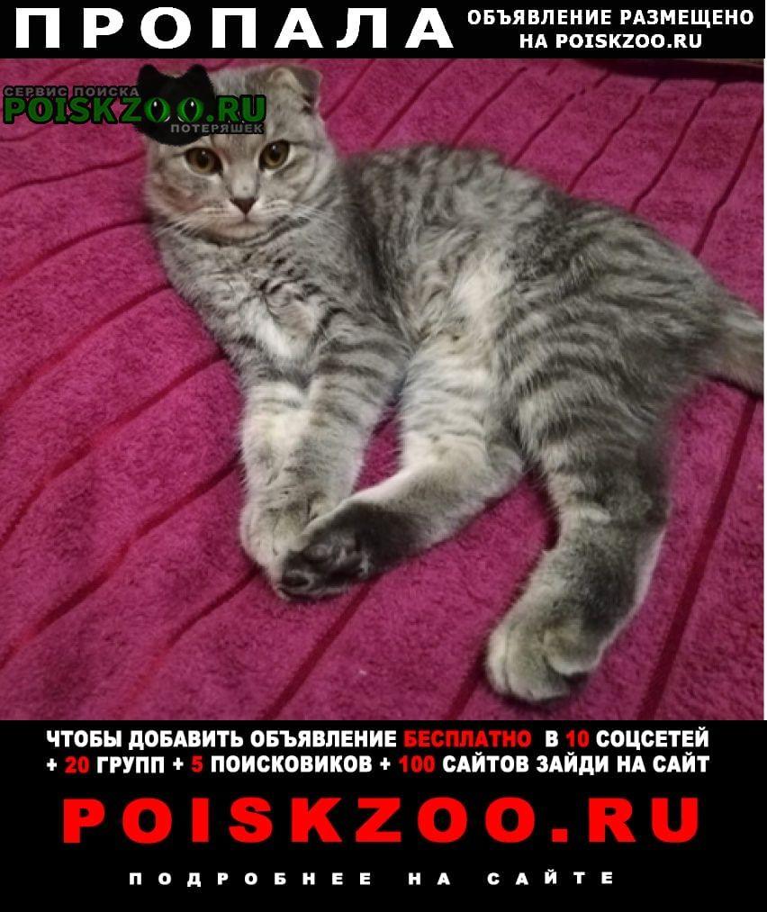 Пропал кот шотландский вислоухий Оренбург