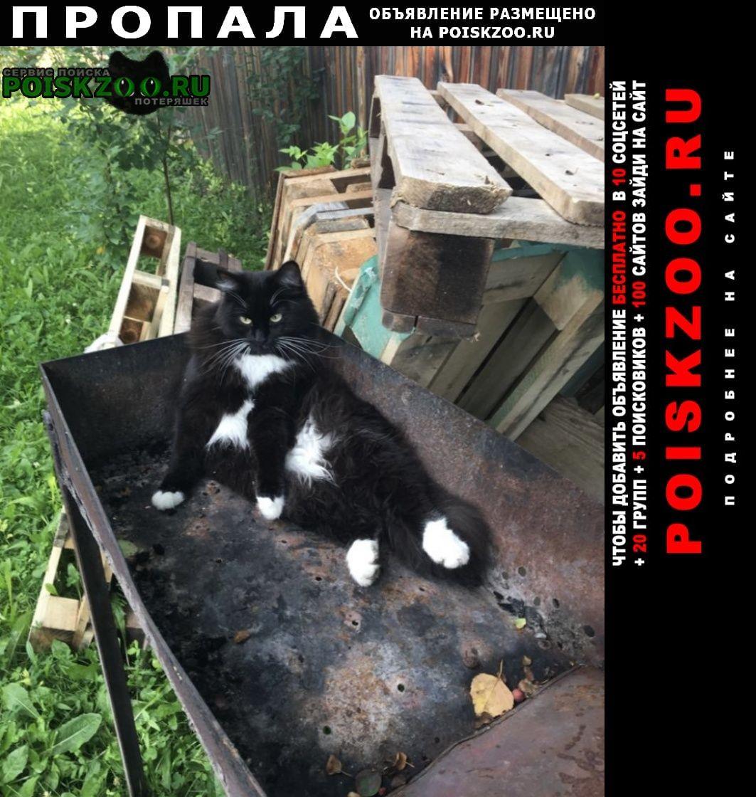 Пропала кошка Красноярск