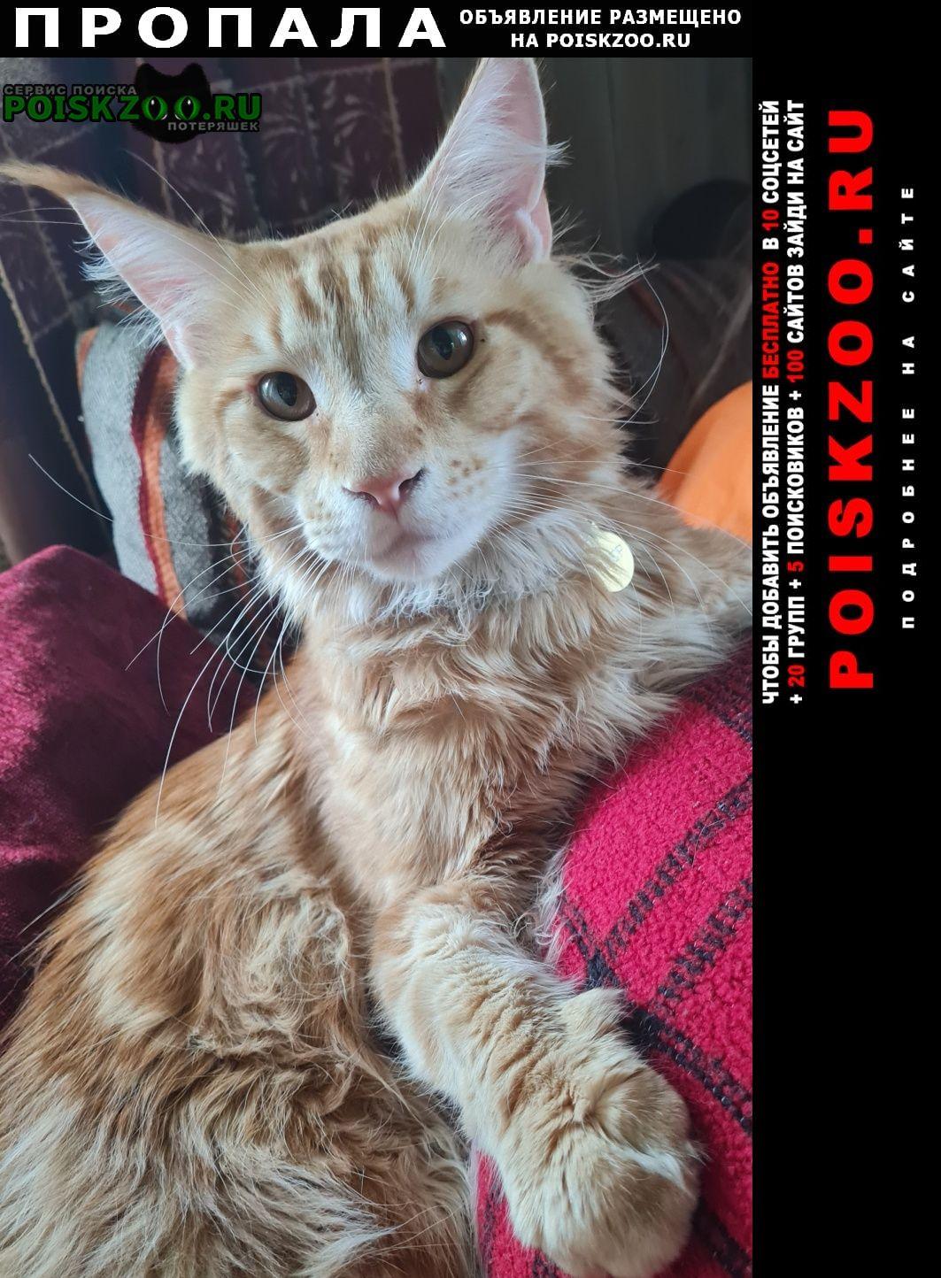 Королев Пропал кот рыжий мейкун