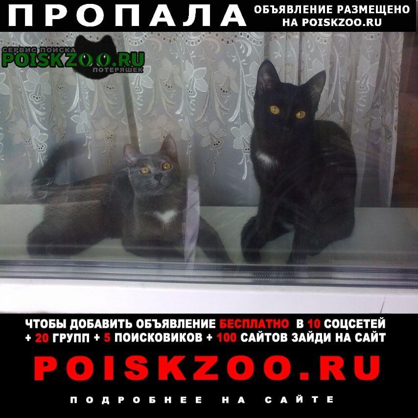 Омск Пропал кот два а