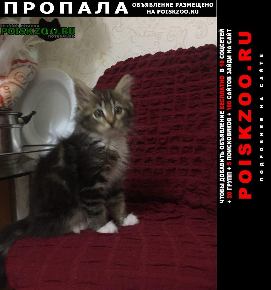 Ханты-Мансийск Пропал котёнок по улице объездная 6