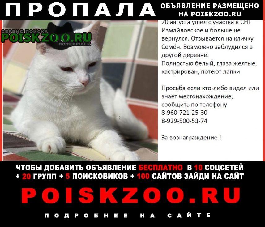 Киржач Пропал кот помогите отыскать ика. семён