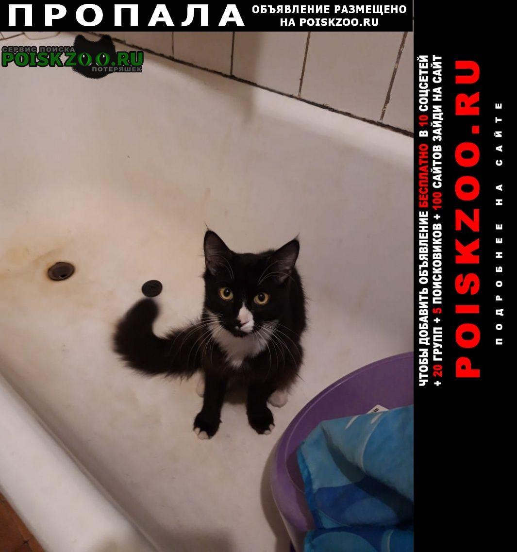Пропала кошка дата пропажи. Одинцово