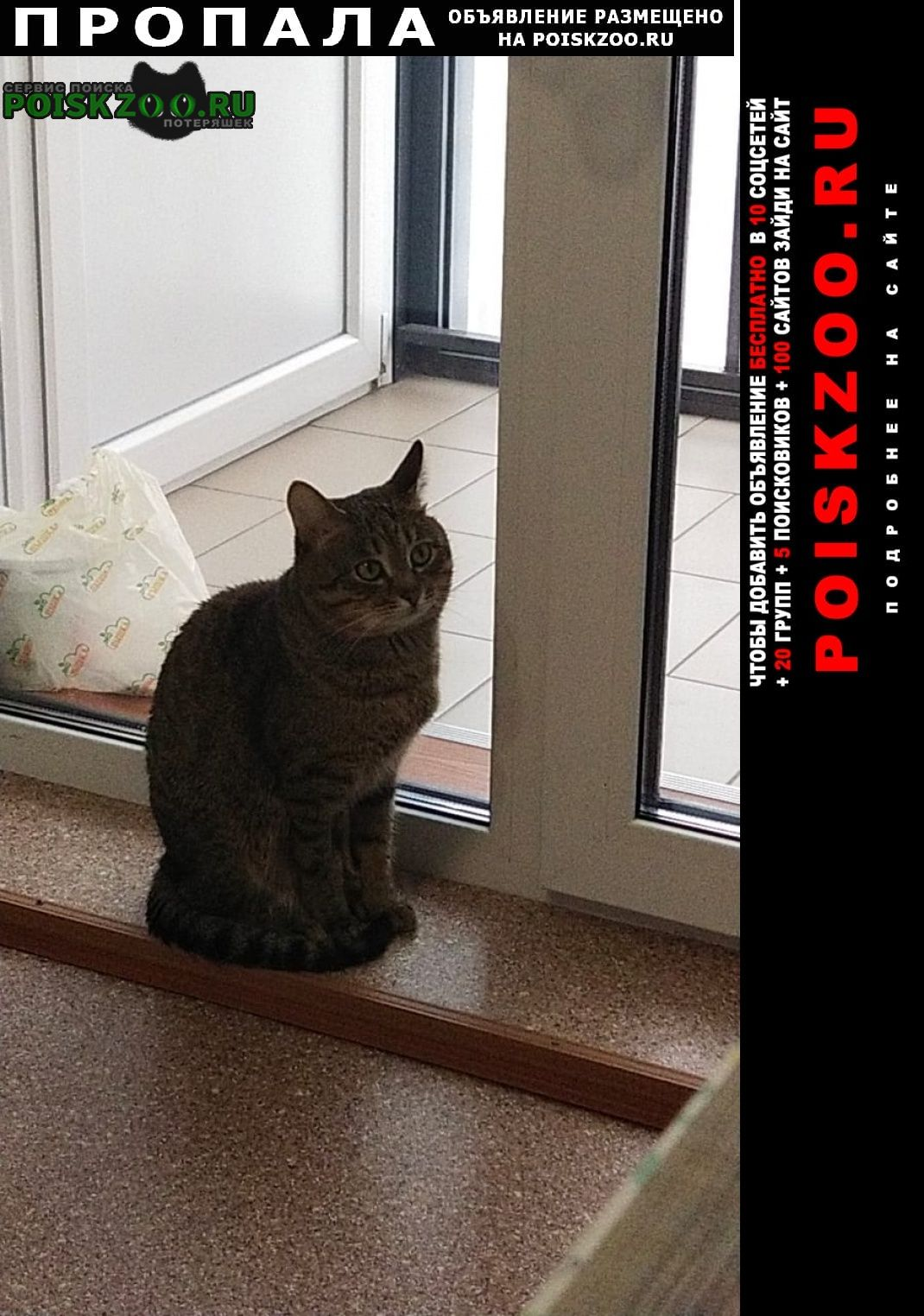 Уфа Пропал кот ищем тигриный окрас