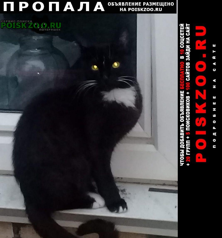 Кисловодск Пропала кошка