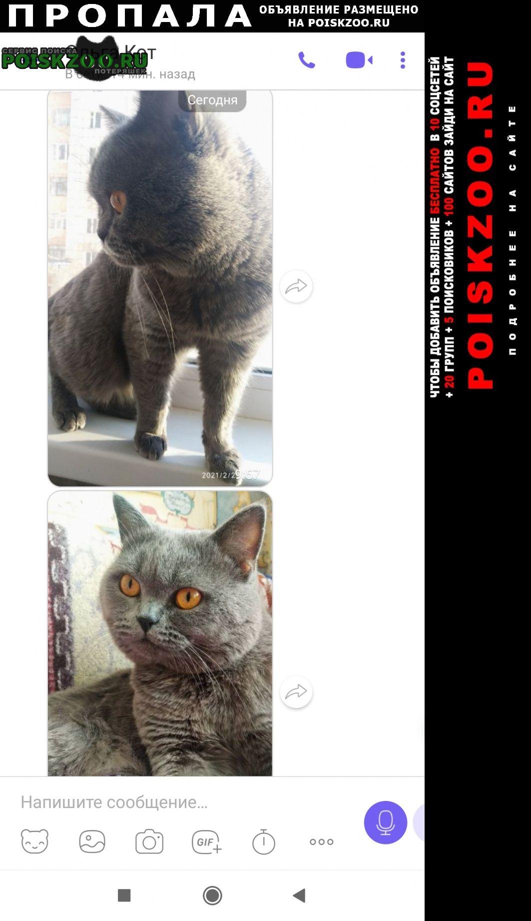 Пропал кот серый британец Пермь