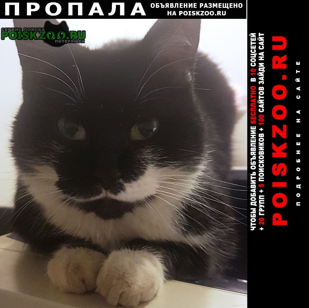 Реутов Пропала кошка