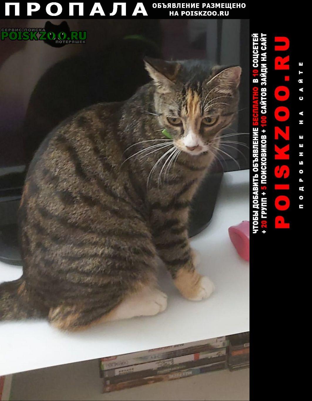 Пропала кошка Хабаровск