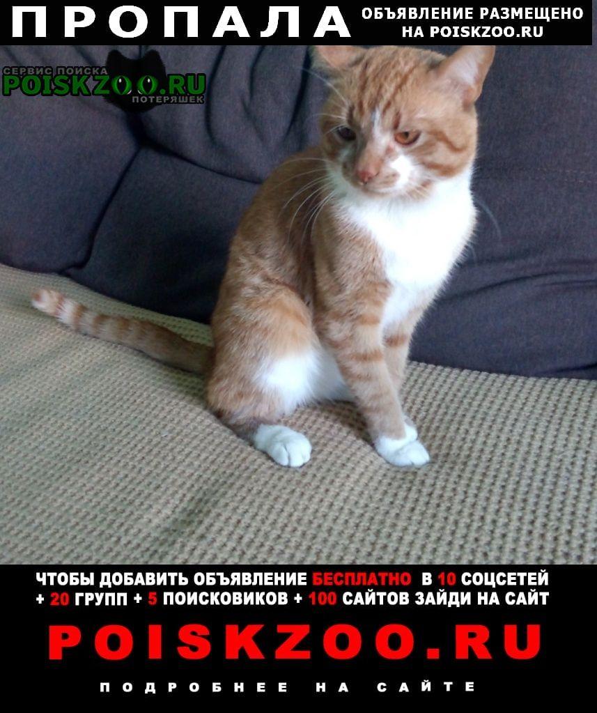 Пропал кот Малаховка