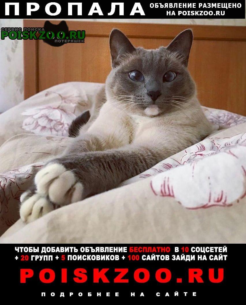 Пропала кошка раменский район, д. пласкинино Бронницы