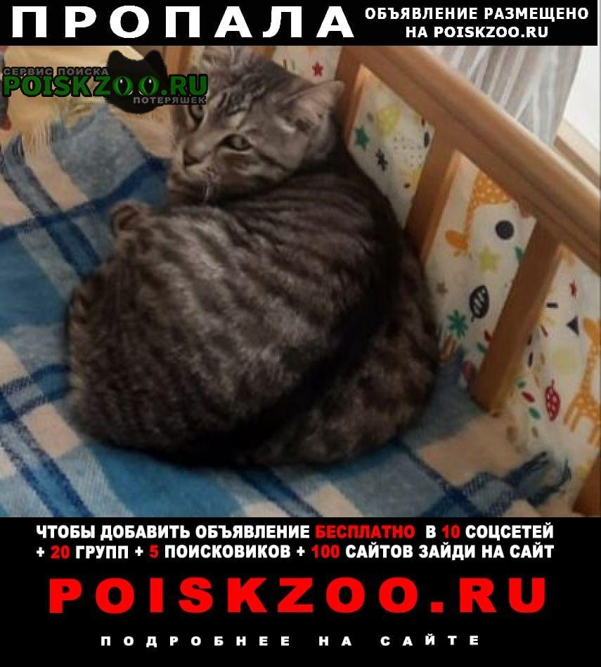 Казань Пропал кот серый в полоску