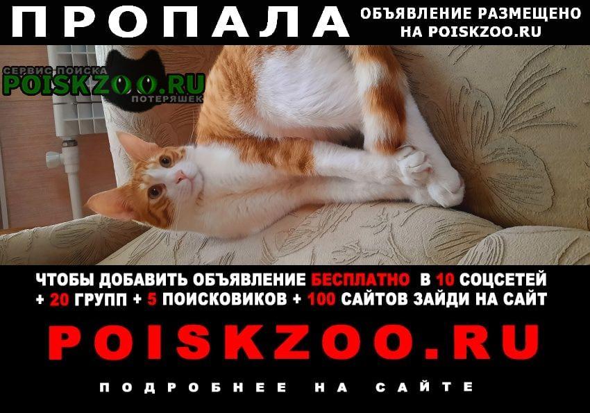 Севастополь Пропал кот любимый