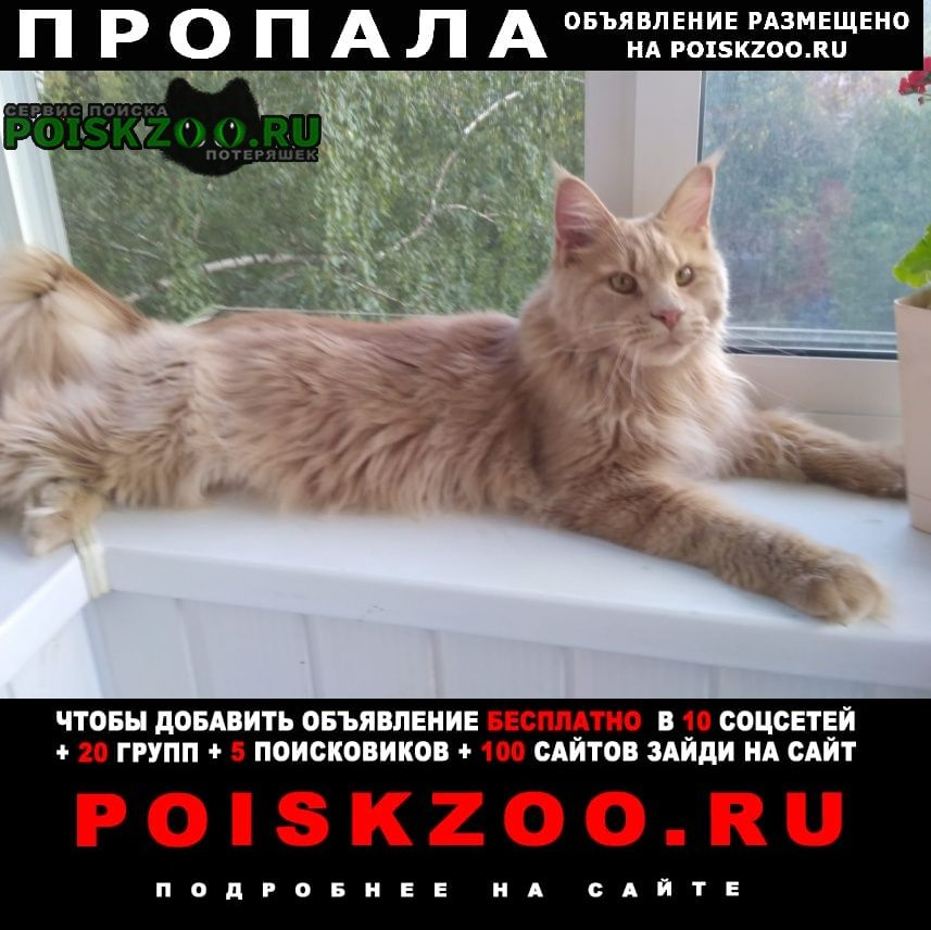 Екатеринбург Пропал кот