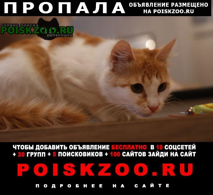 Загорянский Пропала кошка, бело-рыжая