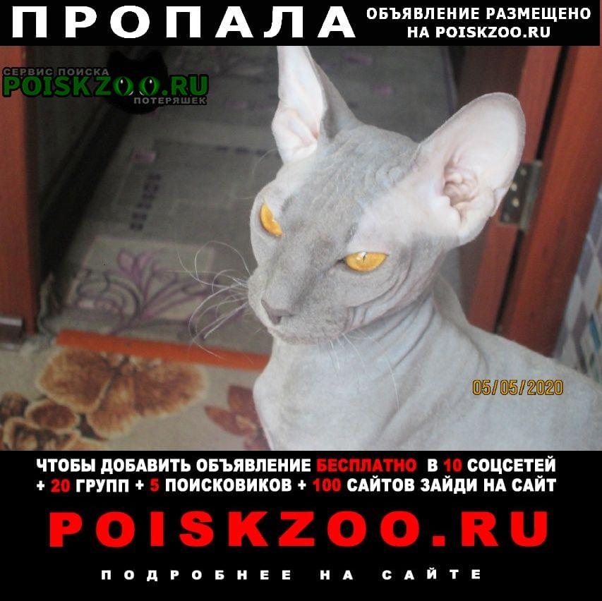 Нижневартовск Пропал кот кастрирован