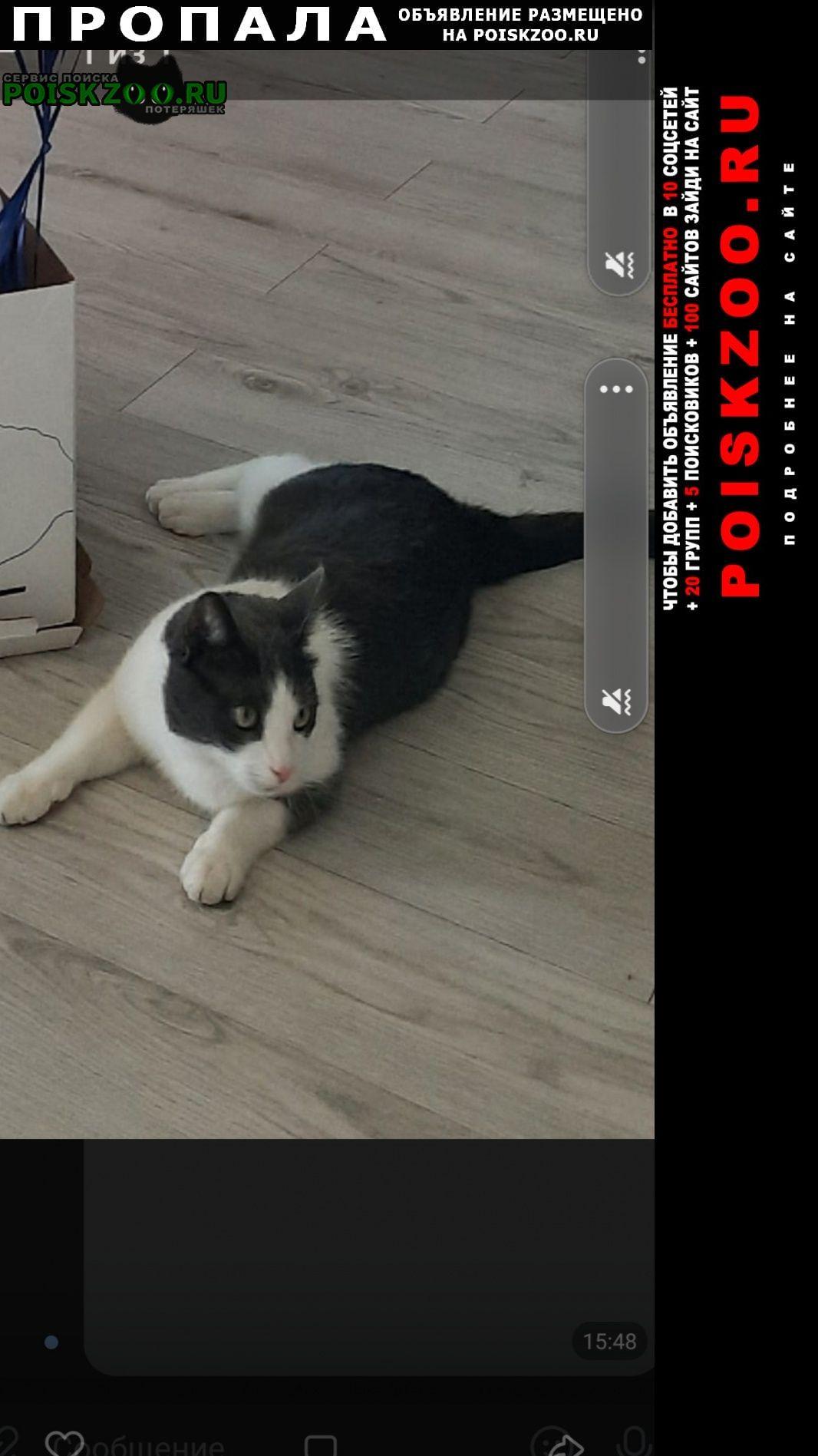 Рязань Пропал кот чик
