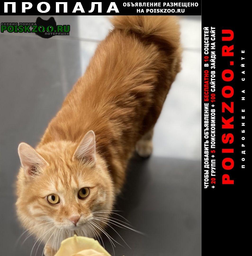 Пропал кот зовут пуля Красноярск